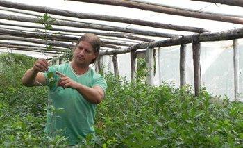 Luis López muestra uno de los plantines de la última zafra