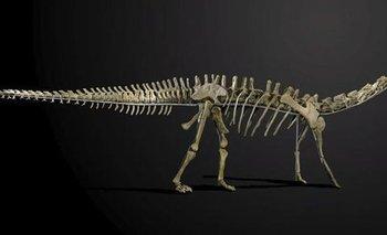 Reino Unido- La casa de subastas Summers Place Auctions en Billinghurst remata un esqueleto de dinosaurio