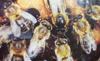 Fuerte defensa del valor del trabajo de la abeja