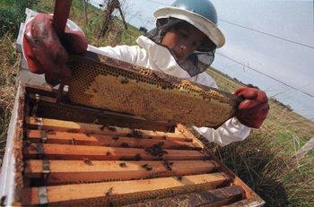 Doce productores perdieron 2.350 colmenas