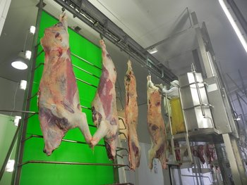 Actividad industrial en el complejo del frigorífico BPU.