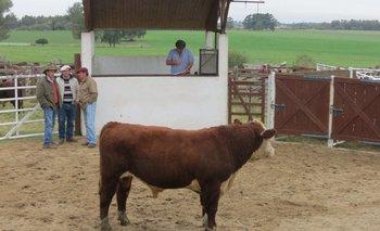 Los jurados Gonzalo Rodríguez, Héctor Bonomi y Luis Ignacio Bordaberry en la jura fenotípica de los toros de Kiyú