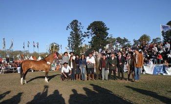 El mejor ejemplar de la raza Criollos, Gran Campeón, coronado por Reilly y Aguerre en la Rural.<br>