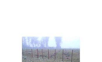 Ovinos muertos tras el temporal de este lunes en Cerro Chato<br>