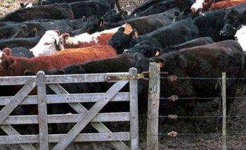 La ganadería argentina quiere reverdecer sus laureles, pero la faena cayó 4% en 12 meses<br>
