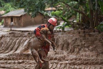 Un bombero rescata un perro atrapado por el lodo en Minas Gerais, Brasil.