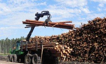 Se prevé un crecimiento del sector forestal para 2024 que incluye llegar a 25.000 puestos de empleo directos e indirectos.