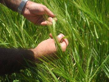 La agricultura tiene nuevas herramientas para avanzar en los cultivos<br>