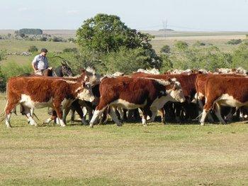 La ganadería también puede contribuir a mitigar el cambio climático<br>