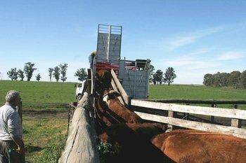 Se acortaron los plazos de embarques de ganados para las plantas de faena