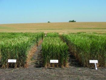 Inase informó sobre modificaciones a normativa de semilla tratada no apta para consumo humano o animal.