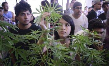 Las plantas perfuman la exposición