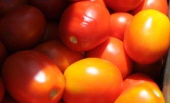 El precio del tomate descendió a $ 30 el kilo y en algunos casos más.<br>
