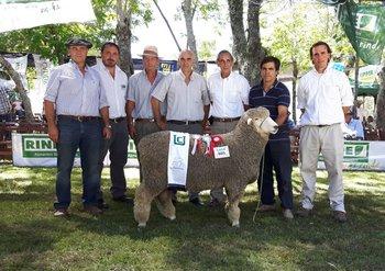 El Gran Campeón Corriedale PO de cabaña Santa Luisa, de Menéndez<br>
