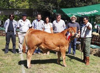 El Gran Campeón Limousin, de Julio A. Severi<br>