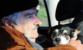 """El expresidente contó al diario La República que su perra Manuela está ciega. """"La pobre está muy viejita ya"""", dijo Mujica"""