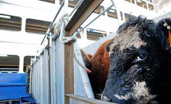 Los ganados que ya se compraron y no puedan exportarse a Turquía irán a Jordania o Egipto<br>