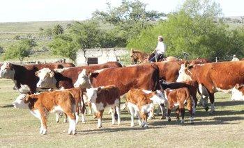 La lucha contra la garrapata es clave para la ganadería<br>