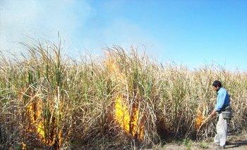 Inicio de la cosecha de la caña según el sistema tradicional, que involucra la quema.<br>