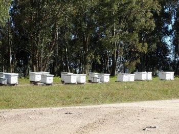 Se teme que se incremente la pérdida de colmenas y de apicultores.