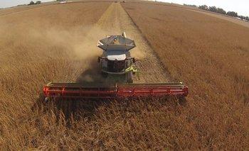 Rinde promedio de la cosecha de soja será inferior a 1.800 kilos/ha