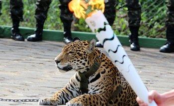 El jaguar, que representaba la Amazonia en la ceremonia, vivía en un zoológico local.<br>