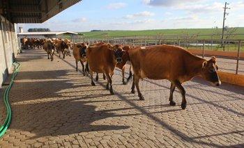 Los productores podrán acceder al beneficio de US$ 16.000 que otorga el gobierno