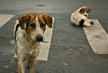 """La población de perros, considerando los """"callejeros"""", podría ser de unos dos millones.<br>"""