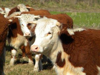 Destacan buenos resultados en reuniones con veterinarios y productores sobre tema garrapata