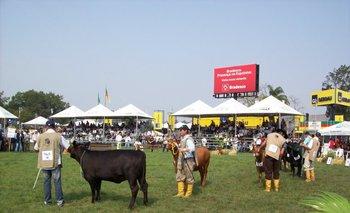 La genética uruguaya competirá en la pista del Aberdeen Angus en la exposición de Esteio.