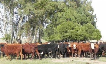 Proyecto de MGAP y FAO plantea una ganadería de forma más eficiente y sostenible
