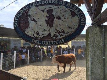 El remate se realizó este sábado en la Central de Pruebas de Kiyú, en San José<br>