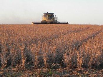El aporte de la tecnología transgénica en la soja ha sido fundamental para su crecimiento