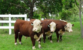 El trabajo reproductivo de los toros en una computadora en tiempo real<br>