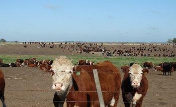 La oferta de ganado de corrales sostiene la alta faena vacuna.