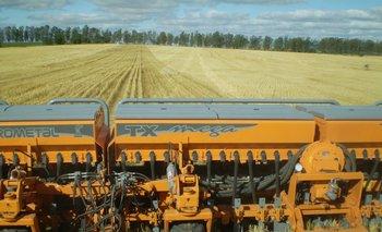 Se eligieron las mejores chacras para sembrar trigo y allí harán soja de segunda