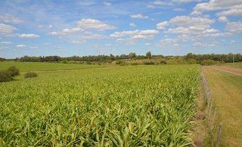 El IRAE es el impuesto más objetivo que grava al sector rural, según Carlos Uriarte