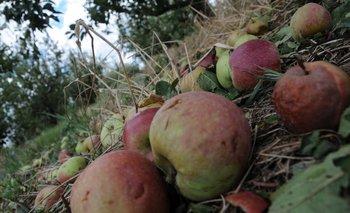 La caída de fruta se produjo sobre todo en manzanos y perales.<br>
