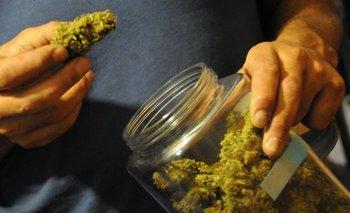 Planean colocar cannabis en el exterior