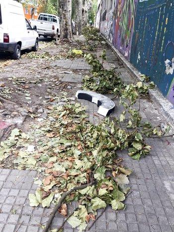 Viernes 10. Varias veredas siguieron cubiertas de ramas y hojas después del temporal del domingo 5.