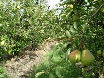 Las condiciones climáticas son favorables para cultivos y pasturas