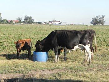 El convenio firmado será de utilidad no solo para los productores lecheros.