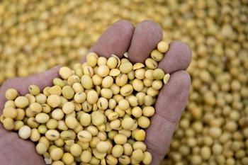 La exportación de soja a China vuelve al tapete con los requisitos fitosanitarios<br>