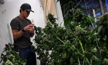 Un trabajador en un dispensario de marihuana el pasado 24 de marzo, en Los Angeles