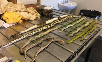 <p>Exóticas serpientes y arañas en exhibición. Fueron encontrados en cajas de zapatos en una sala de correos de Melbourne.</p><p></p>
