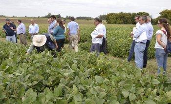 Los participantes de la jornada apreciaron de cerca a las sojas Génesis.<br>