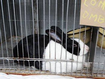 Se pueden observar conejos de seis razas.<br>