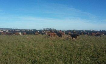 La comercialzlación de haciendas estará en la atención del congreso de la Federación Rural