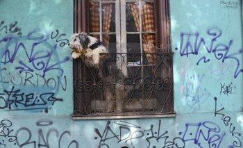 Los canes deberán acceder con un collar y una correa puesta