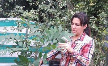 Ana Laura Sastre, junto a Luis López, dirige el vivero Imperio Verde.<br>